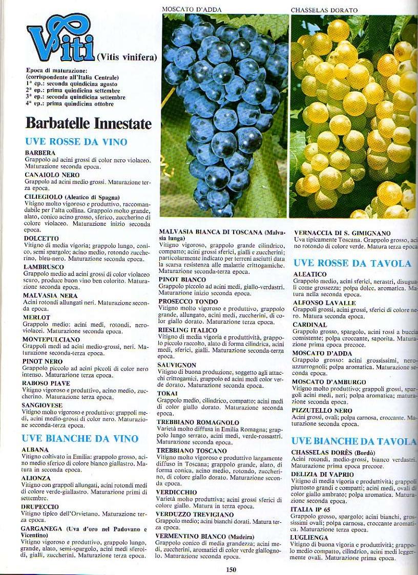 http://www.energialternativa.info/public/newforum/ForumEA/D/piant1123_1.jpg