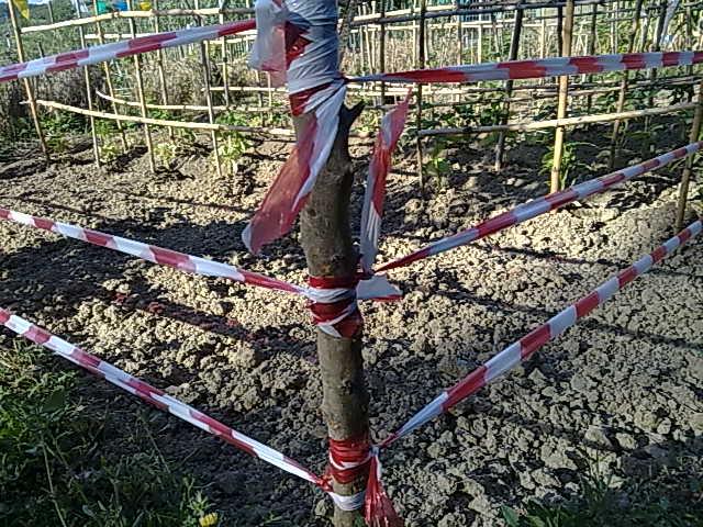 http://www.energialternativa.info/public/newforum/ForumEA/M/070720165018.jpg