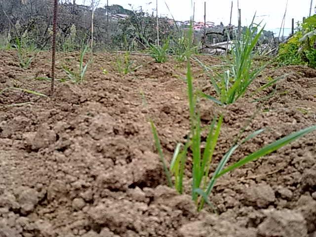 http://www.energialternativa.info/public/newforum/ForumEA/M/201120152246.jpg