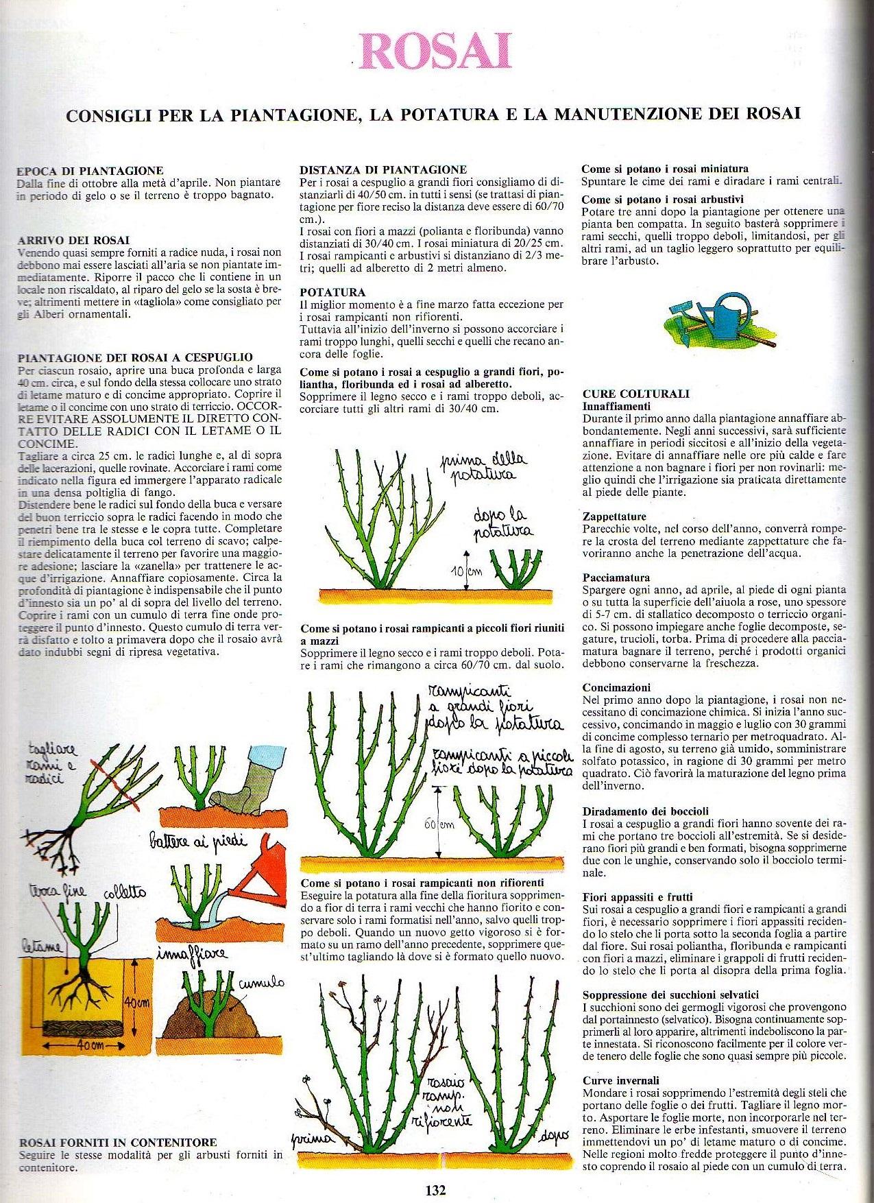Terriccio Non Assorbe Acqua piccolo aiuto per la piantagione delle piante in terra