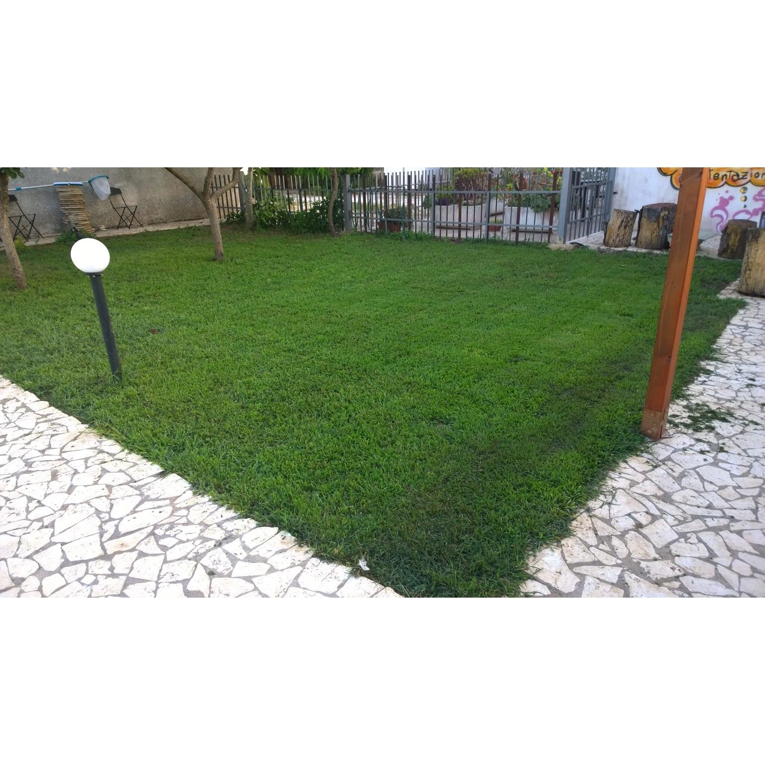 Manutenzione Prato Di Gramignone giardino con ghiaia- pagina 5 - cura del verde